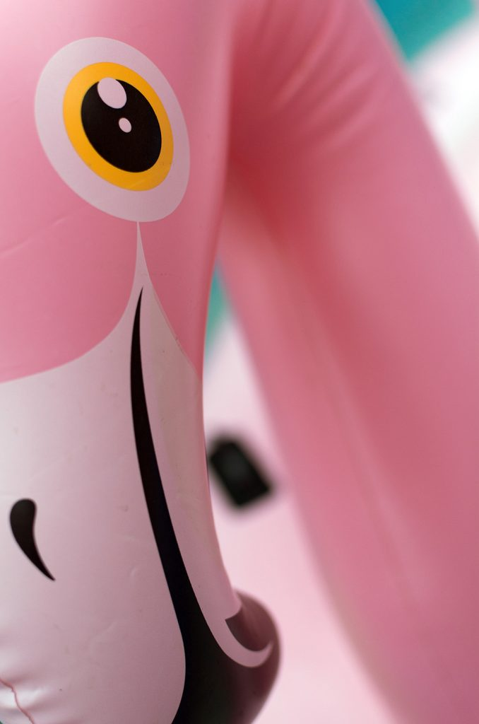 minimalism in photography - plastic flamingo