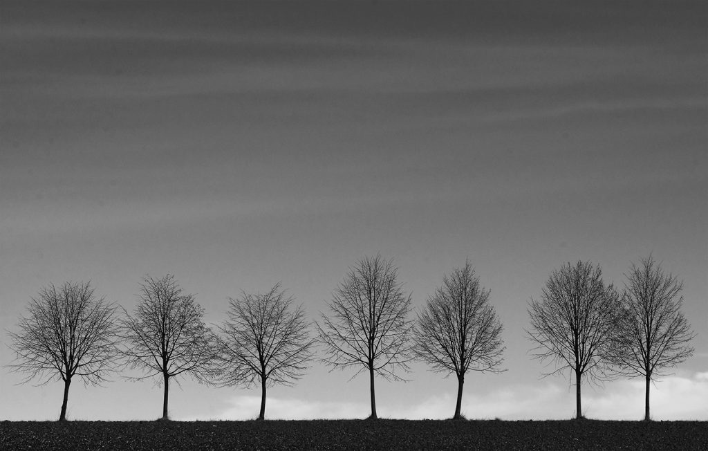 minimalist landscape- row of trees