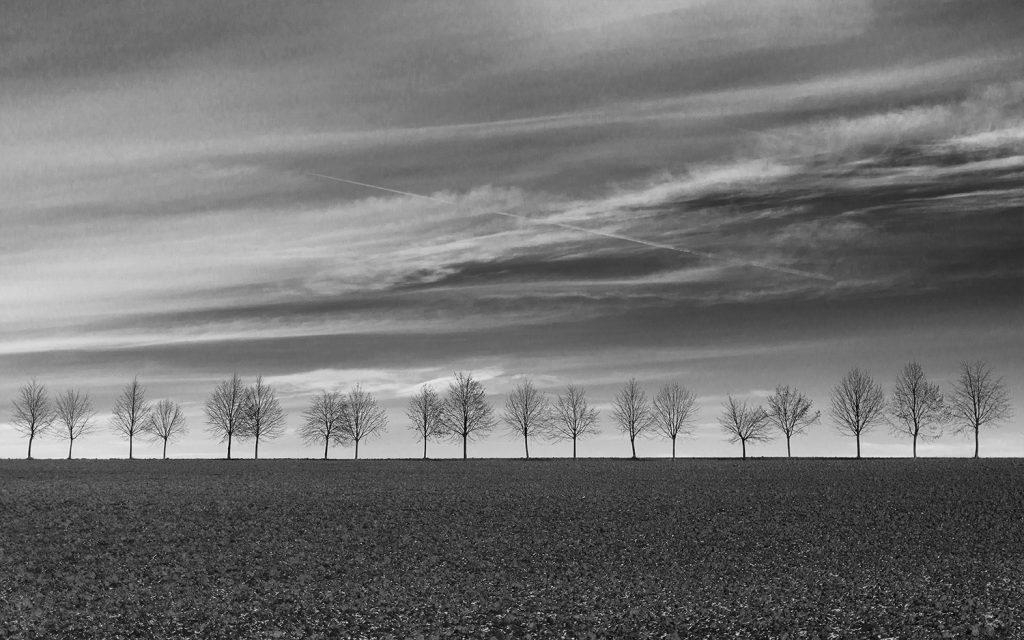 minimalist landscape - trees on the horizon