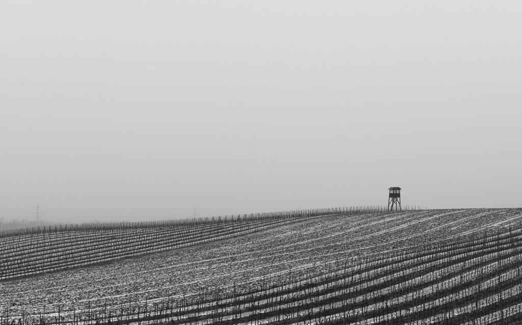 minimalist landscape - winter vineyard