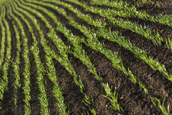 Field rows, minimalist photography fine art print by Martin Vorel