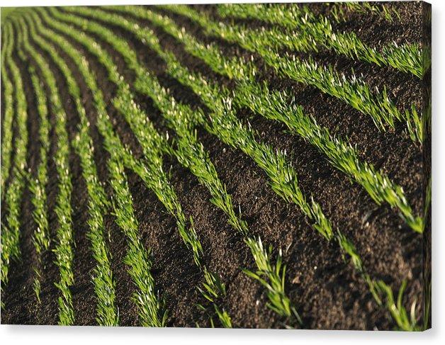 Field rows - Canvas print - 51cm x 34cm