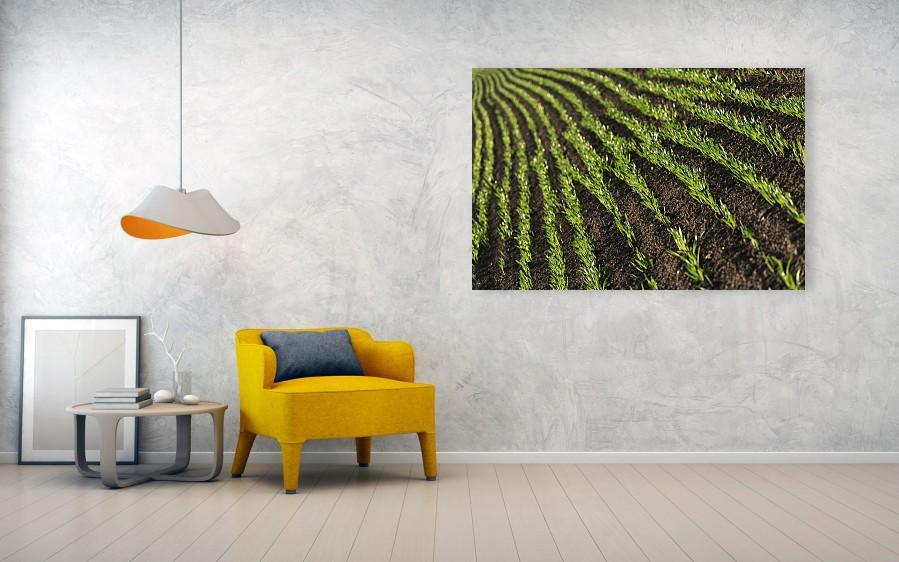 Field rows - minimalist photography acrylic print 152cm x 102cm