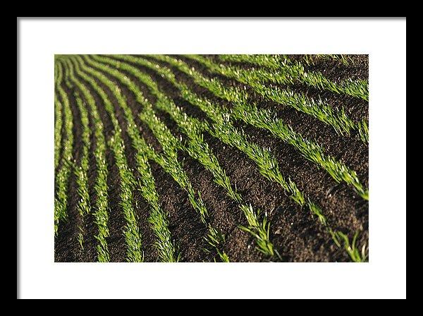 Field rows - Small framed print, 41cm x 27cm