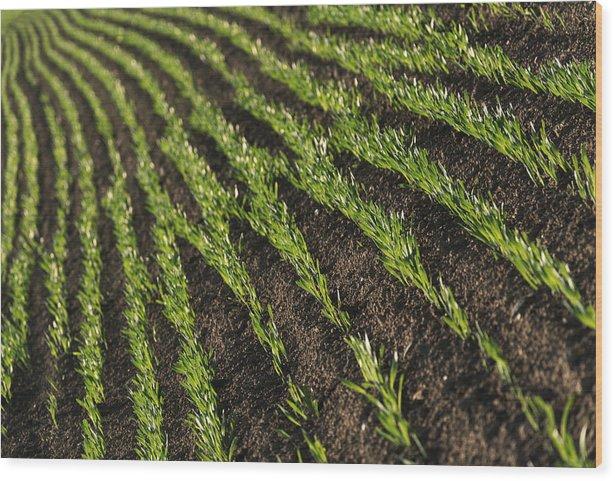 Field rows - wood print minimalism 61cm x 41cm