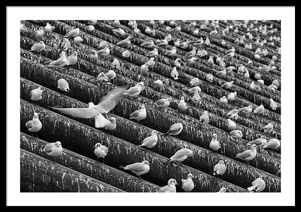 Seagulls on Icebreaker – Fine Art Photography Print